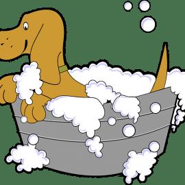 Aprire un lavaggio cani self service