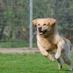 Aprire una pensione per cani