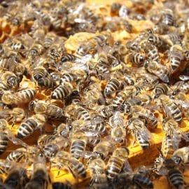 Aprire un apicoltura per allevare api