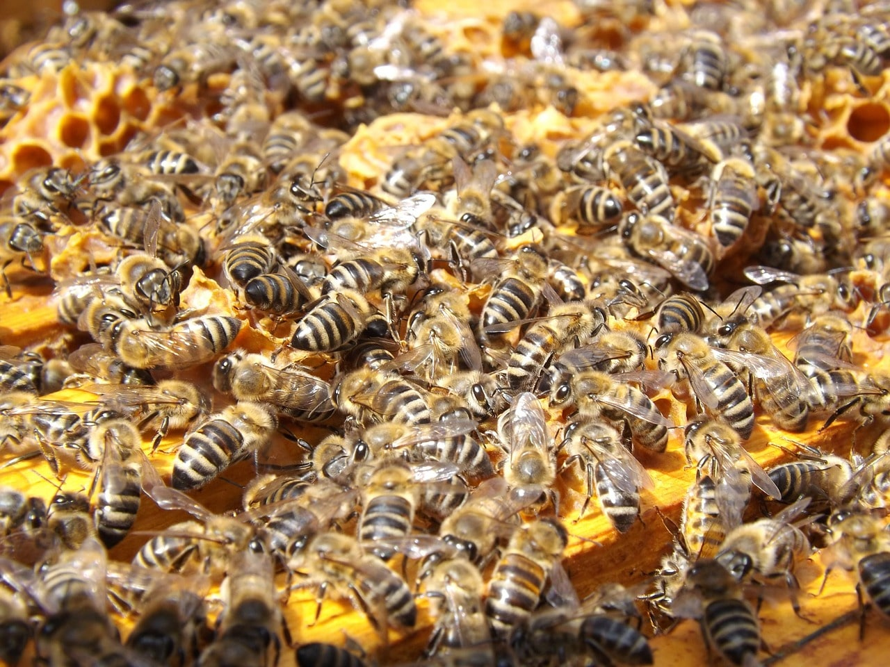 apicoltura per allevare api