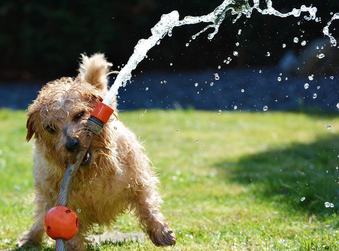 Aprire un salone di toelettatura per cani
