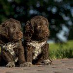 Aprire un allevamento cani