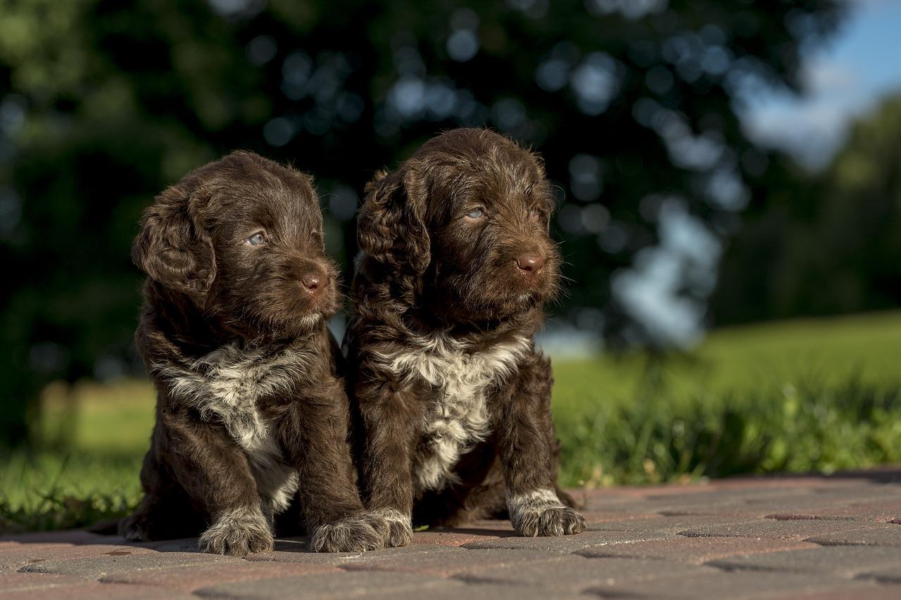 allevamento cani
