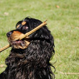Aprire un centro addestramento cani