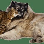 Rivendita prodotti di lusso per animali