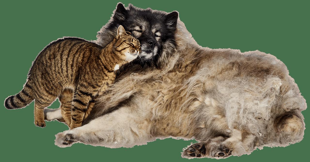 prodotti di lusso per animali