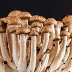 Aprire una coltivazione funghi