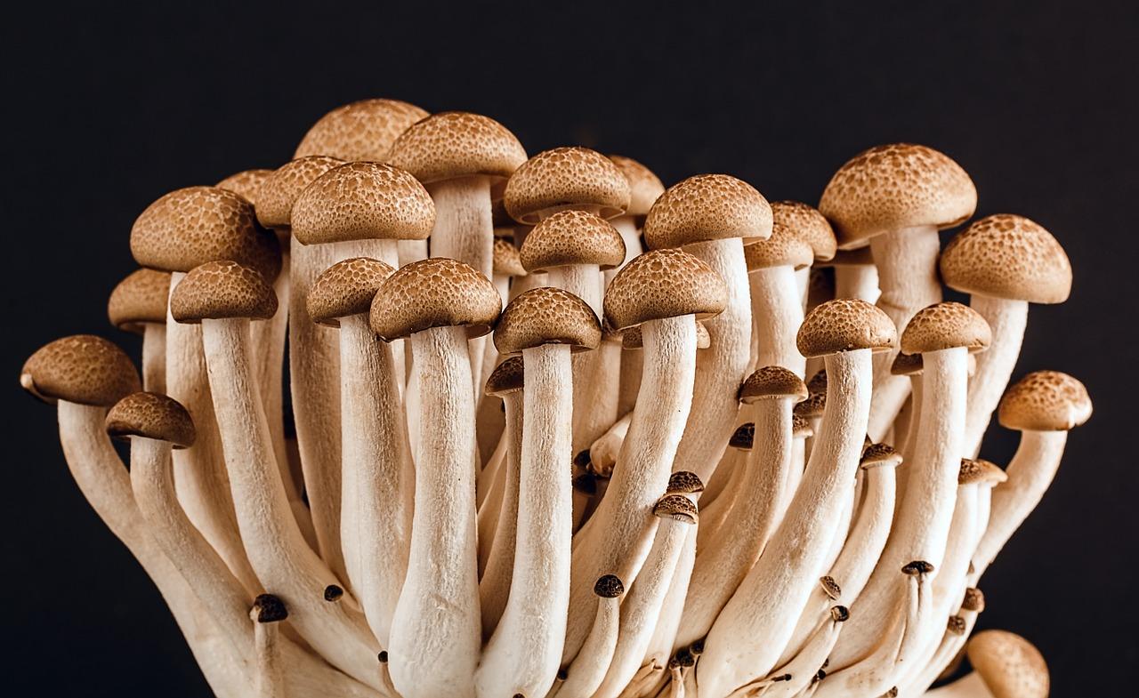 coltivazione funghi