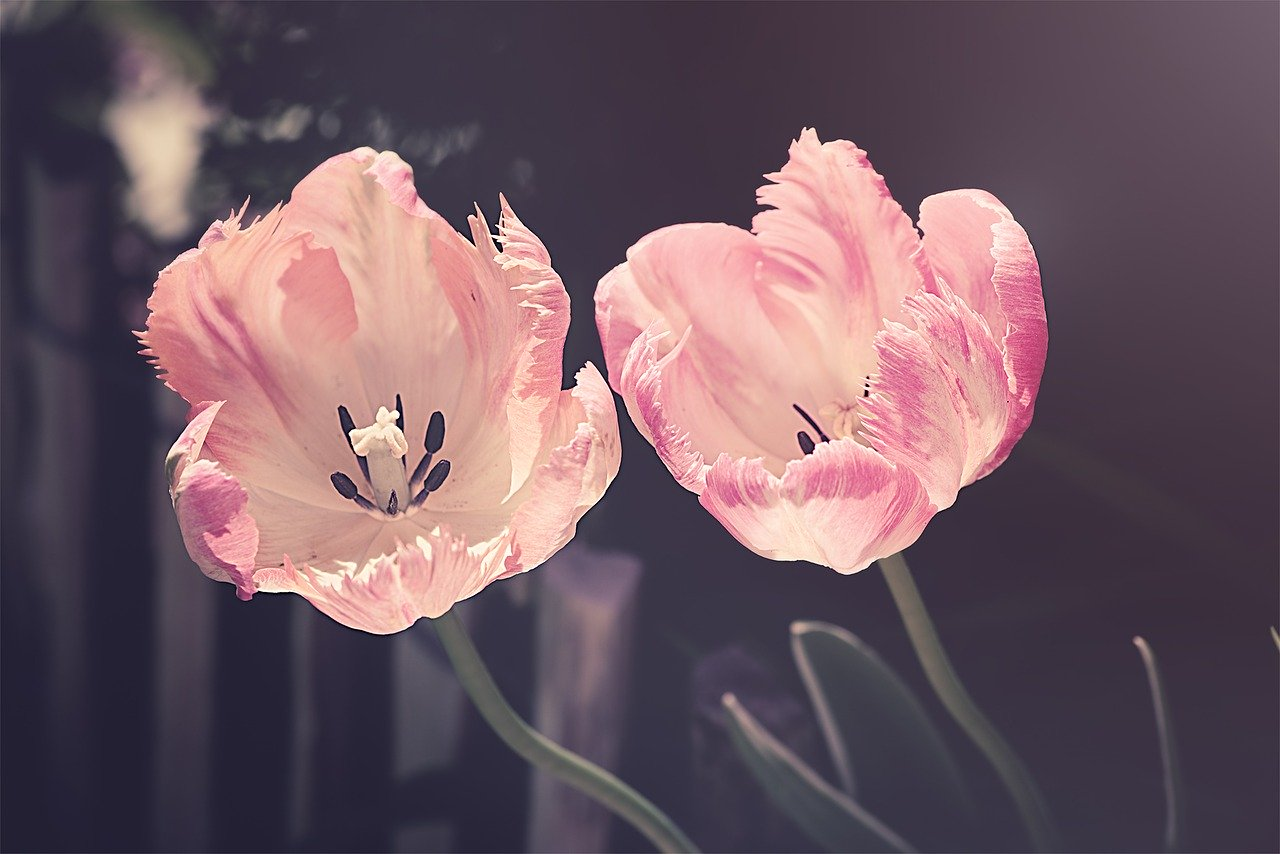 Aprire una floricultura